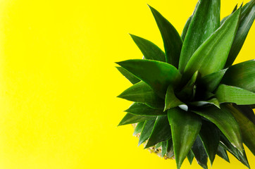 Top view and close up of pineapple.Shot of pieneapple leaves on yellow background
