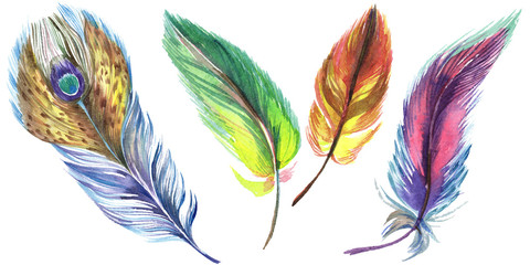Colorful feathers. Watercolour drawing fashion aquarelle isolated. Isolated feather illustration element.