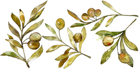 Green olives watercolor background illustration. Watercolour drawing green leaf plant botanical floral foliage.