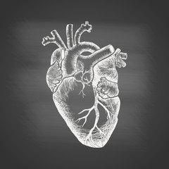 Anatomical human heart - chalk drawing on the blackboard. Hand drawn sketch in vintage engraving style. Vector illustration.