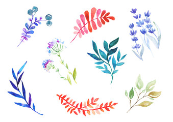 colorful watercolor leaves and flowers