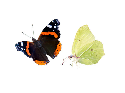 Common brimstone and red admiral butterflies isolated on white