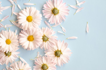 A lot of daisies with petals on a blue background.