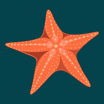 Vector image of a starfish on a blue background.