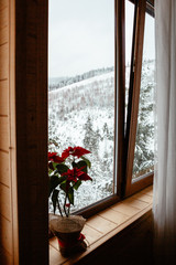 window with flowers with winter view