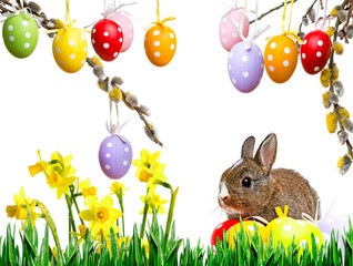 little rabbit and easter eggs isolated on white