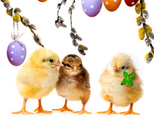 three chickens and easter eggs