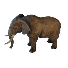 Large African Elephant isolated on white background 3d illustration