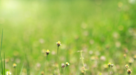 Background of beautiful weeds