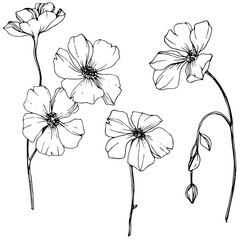 Fototapeta Vector Flax floral botanical flower. Black and white engraved ink art. Isolated flax illustration element.