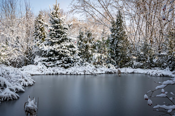 Winter pond covered with silver ice. Around the pond there are coniferous trees and spruces, grass and coastal plants covered with white fluffy snow. Selective focus. There is a place for text.