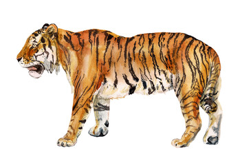 Watercolor realistic tiger