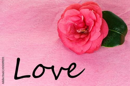 Fleur De Camelia Et Saint Valentin Stock Photo And Royalty Free