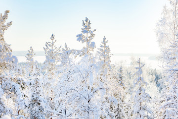 White snowy birches in wintry forest in sunshine Wall mural