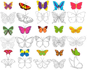 butterfly, coloring book, set