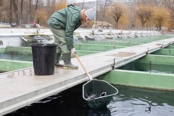 Woman catching fish with landing net on sturgeon farm