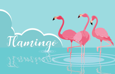 beautiful flamingos birds flock in the landscape