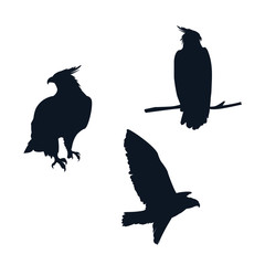 Poster Uilen cartoon hawks birds silhouettes with different poses