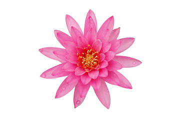 Fotobehang Waterlelies Blooming Pink Water Lily Flower Isolated on White Background