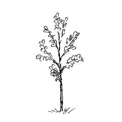 Hand drawn little tree. Vector illustration.