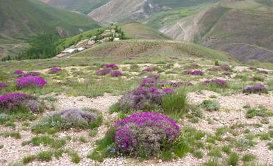 Schönes Land Iran