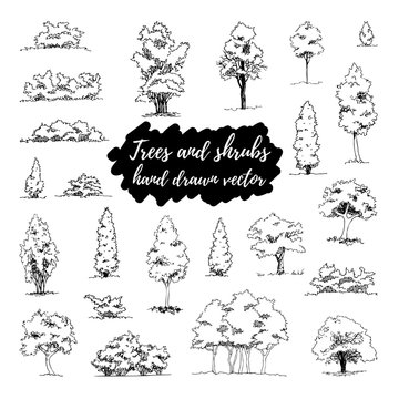 Set of hand drawn architect trees and shrubs, vector sketch, architectural illustration