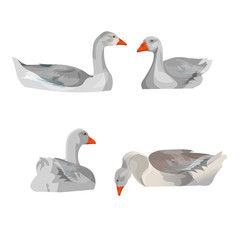 Set of vector geese