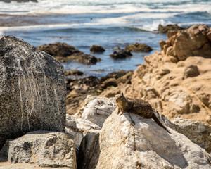 Monterey Squirrels