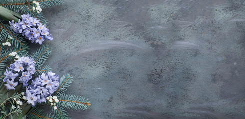 Winter background in green and blue: hyacinth flowers, fir twigs and leaves on dark, copy-space
