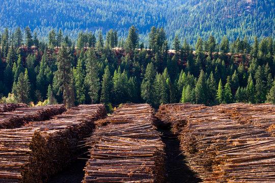 Logging Lumber Industry Timber Logs