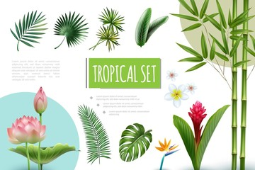 Wall Mural - Realistic Tropical Plants Collection
