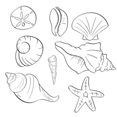 Line art of Various Seashells