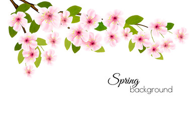 Fototapete - Spring nature background with a pink blooming sakura. Vector.