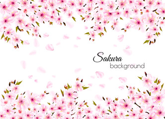 Fototapete - Branches of a blossoming sakura  background. Vector.