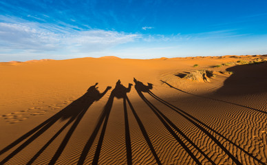 Late afternoon shadows of Dromedary camels and caravan led by Tuareg man in Merzouga, Erg Chebbi, Morocco, Africa