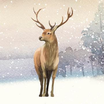 Male deer painted by watercolor vector
