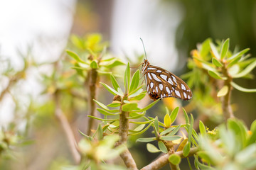 A brown and white butterfly sits on a plant