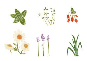 six herbs