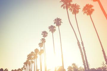 Palms in sunset light in Santa Barbara