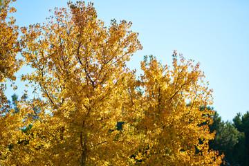 Autumn colors background