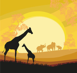 Cartoon African Savannah Card Poster