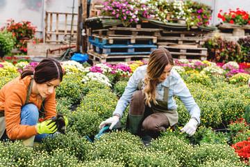 Gardeners working in greenhouse