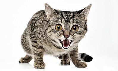Scarry cat in the white studio floor