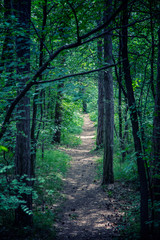 path in green forest