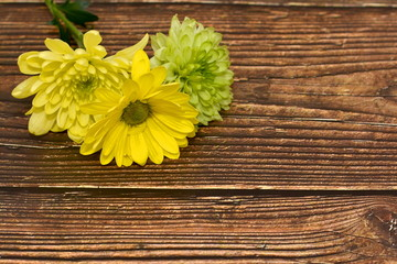 Beautiful greeting card to the woman's day. Yellow and green flowers on the dark wooden background. View from top. Space for text. Holiday card. Mother's day greeting card. Spring, love and happiness.