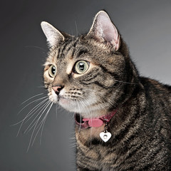 sweet cat portrait in a photo studio