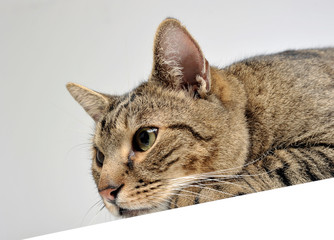 Domestic cat enjoy the white photo studio