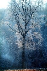 Frozen landscape in Piedmont in northern Italy,  during winter.