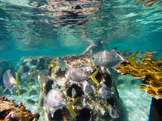 girl snorkeling in artificial reef with yellow tailed fish