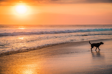 Dog, ramatic Blazing Sunset Landscape at Over the Meadow and Orange Sky Above it. Magnificent Ocean View Burning Skies. Sunset Ocean Dog Landscape. Panorama Twilight Morning Sky and Cloud with Sunrise